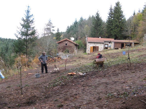 fruit trees planted out