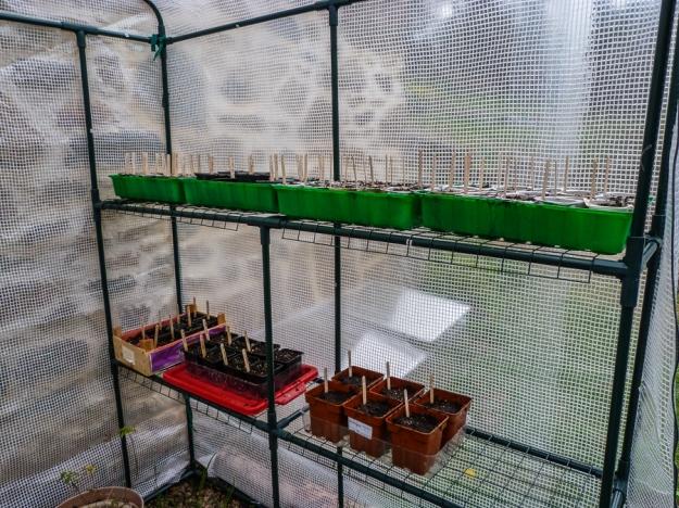 20140406-seedlingserre