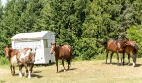 Horses near La Peluche