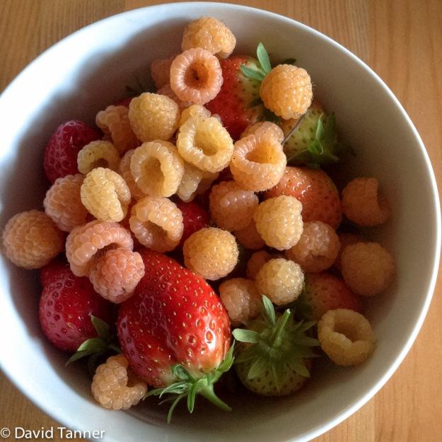 rasberries and strawberries
