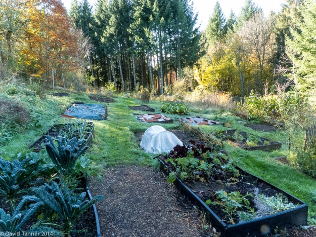 raised beds - november