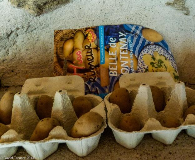 "chitting potatoes ""Belle de Fontenay"""